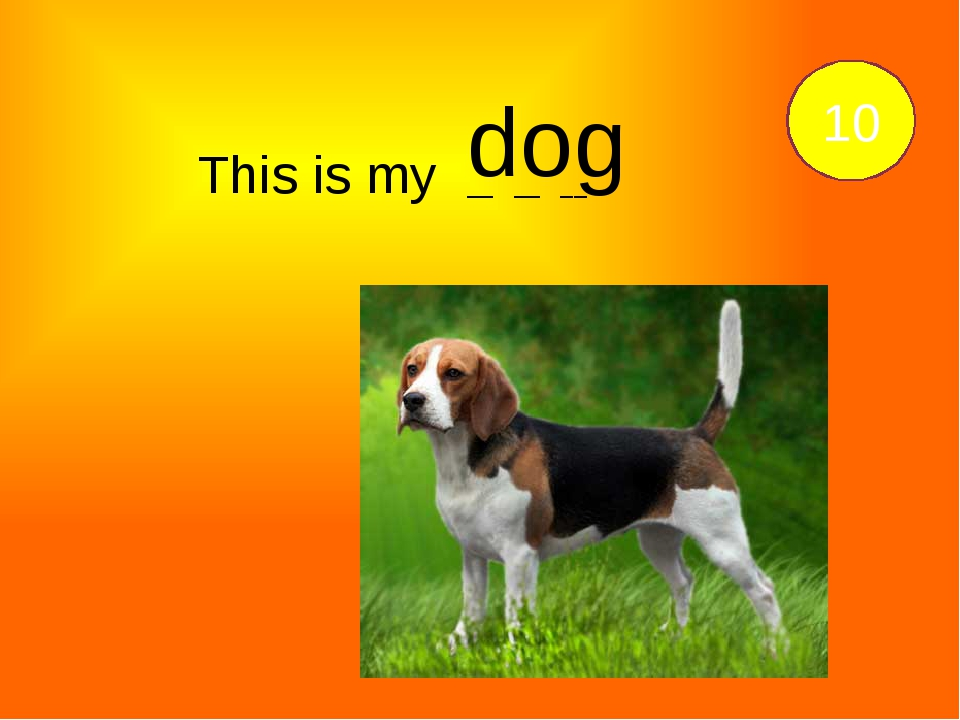 This is my __ __ __. 10 dog