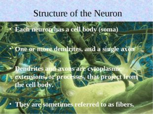 Structure of the Neuron Each neuron has a cell body (soma) One or more dendri