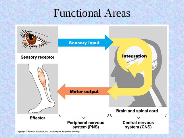 Functional Areas