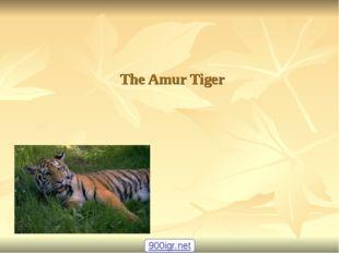 The Amur Tiger 900igr.net