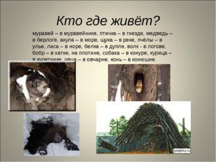 Кто где живёт? муравей – в муравейнике, птичка – в гнезде, медведь – в берлог