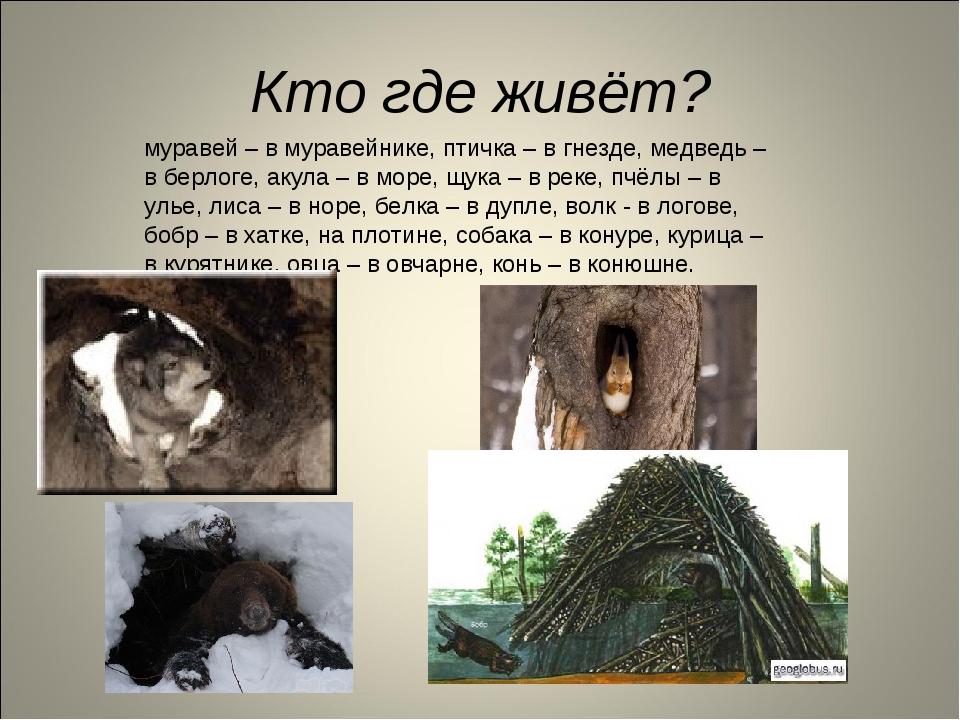 Кто где живёт? муравей – в муравейнике, птичка – в гнезде, медведь – в берлог...
