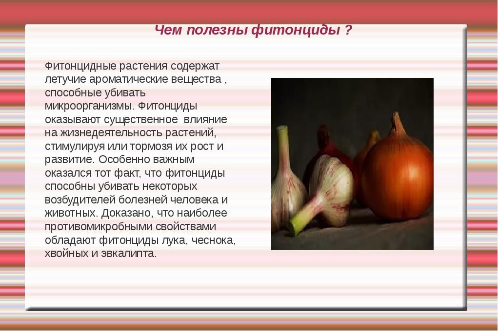 Чем полезны фитонциды ? Фитонцидные растения содержат летучие ароматические в...