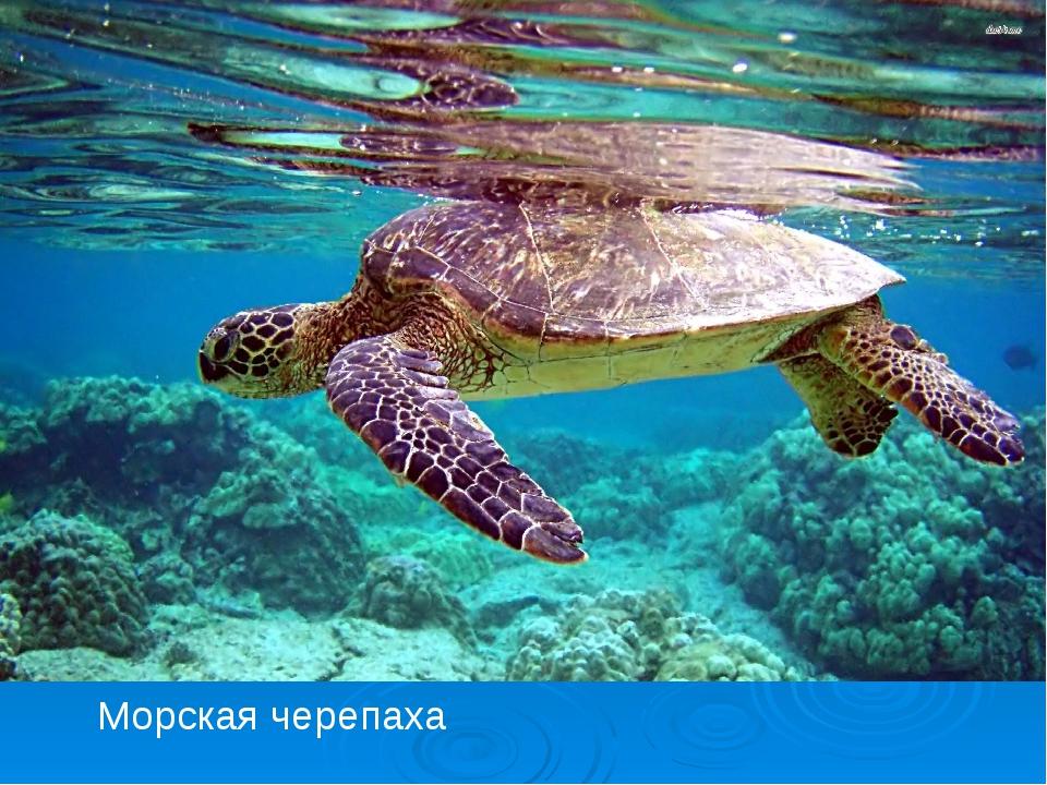 черепаха с акулой бесплатно