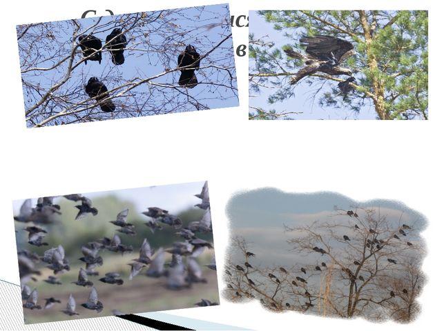 С деревьев тысячи грачей Сорвутся в лужи