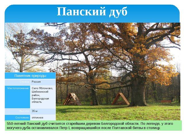 Панский дуб 550-летний Панский дуб считается старейшим деревом Белгородской о...