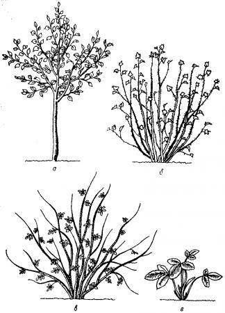 Нарисуй схематически дерево кустарник