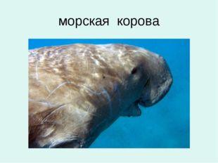 морская корова