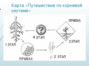 Карта «Путешествие по корневой системе»