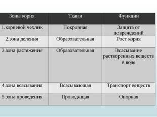 Зоны корня Ткани Функции 1.корневой чехлик Покровная Защита от повреждений 2.