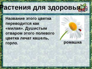 Название этого цветка переводится как «милая». Душистым отваром этого полевог
