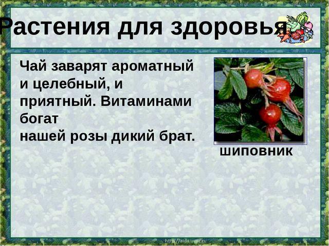 Чай заварят ароматный и целебный, и приятный. Витаминами богат нашей розы дик...