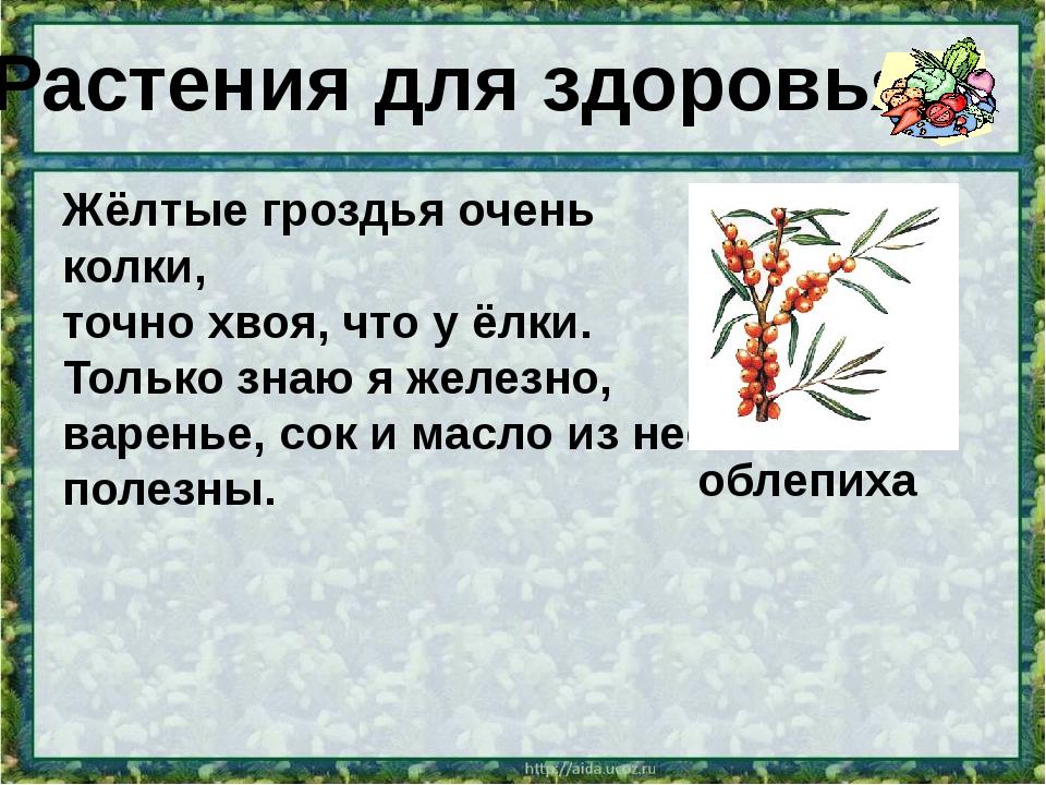 Растения для здоровья Жёлтые гроздья очень колки, точно хвоя, что у ёлки. Тол...