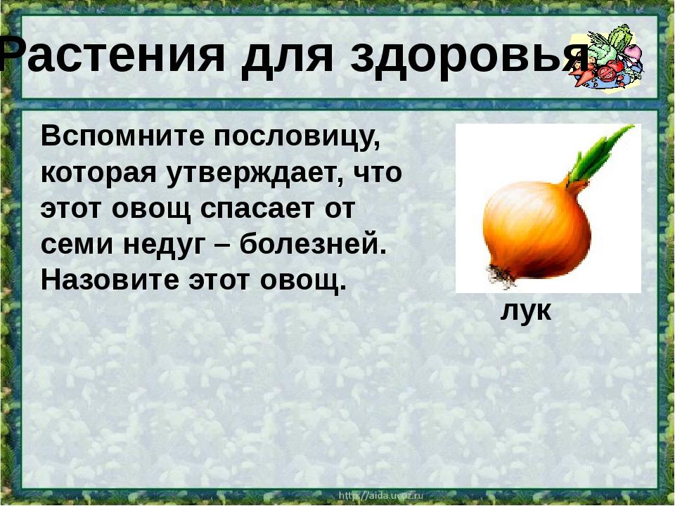 Вспомните пословицу, которая утверждает, что этот овощ спасает от семи недуг...