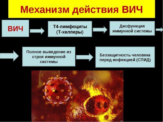 Механизм действия ВИЧ ВИЧ Т4-лимфоциты (Т-хелперы) Дисфункция иммунной систем...