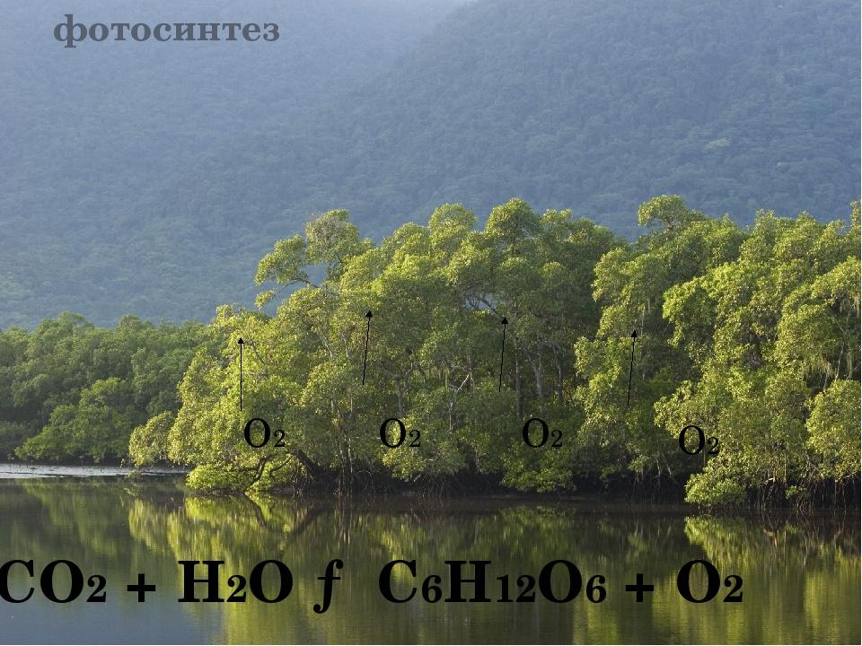 фотосинтез О2 О2 О2 О2 CO2 + H2O → C6H12O6 + O2