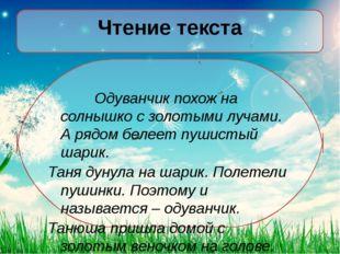 Чтение текста Одуванчик похож на солнышко с золотыми лучами. А рядом белеет