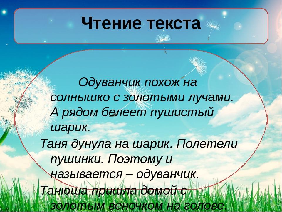 Чтение текста Одуванчик похож на солнышко с золотыми лучами. А рядом белеет...