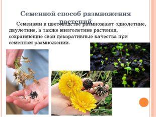 Семенной способ размножения растений Семенами в цветоводстве размножают однол