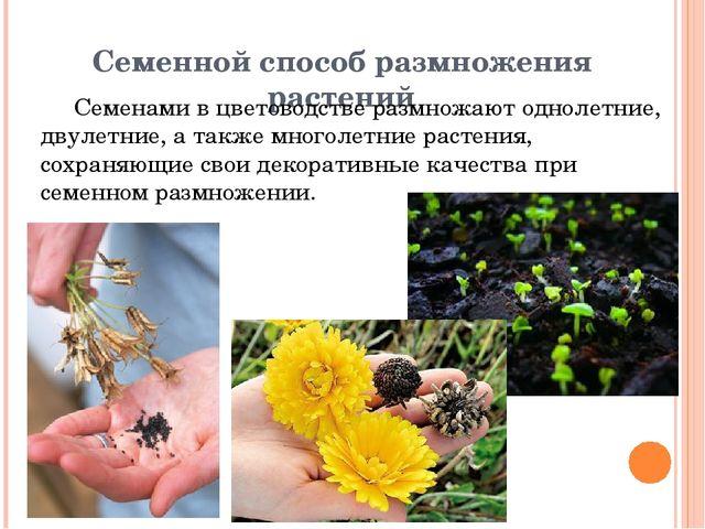Семенной способ размножения растений Семенами в цветоводстве размножают однол...