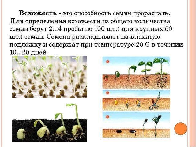 Обработка растворами удобрений и стимуляторов используется для ускорения прор...