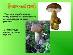 У желчного гриба шляпка снизу розовая, на ножке черная сеточка, мякоть на ср