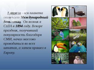 1 апреля - вся планета отмечает Международный день птиц. Он возник в США в 1