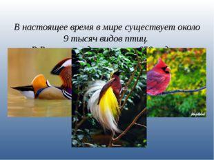 В настоящее время в мире существует около 9 тысяч видов птиц. В России гнездя