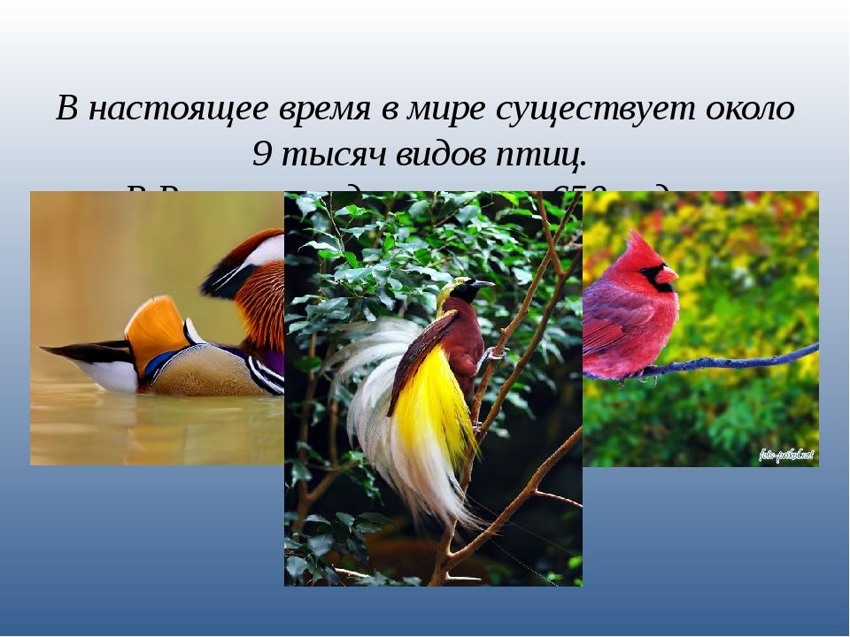 В настоящее время в мире существует около 9 тысяч видов птиц. В России гнездя...
