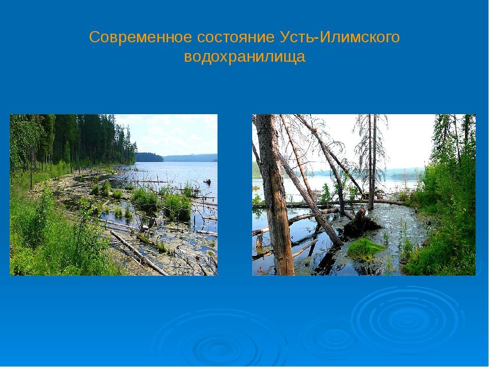 Современное состояние Усть-Илимского водохранилища