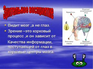 Структура зрительного анализатора