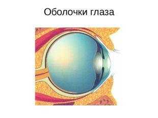 Оболочки глаза