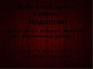 Зрительный пигмент колбочек Йодопсин Воспринимают красный, зелёный, сине – фи