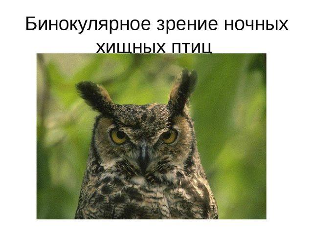 Бинокулярное зрение ночных хищных птиц
