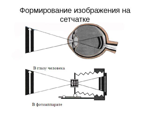 Формирование изображения на сетчатке