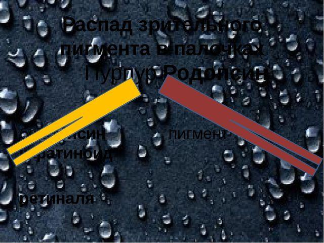 Распад зрительного пигмента в палочках Пурпур Родопсин белок псин пигмент кар...