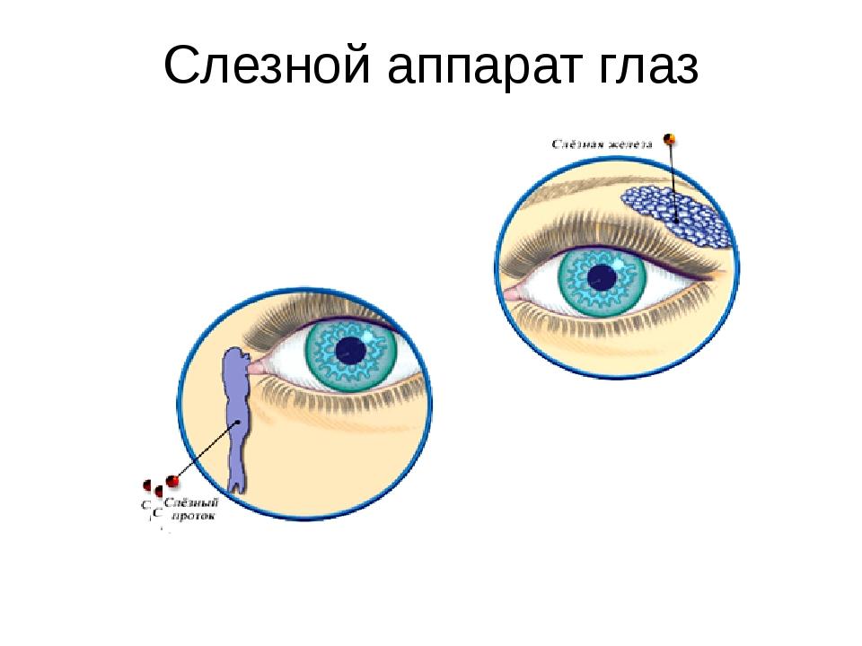 Слезной аппарат глаз
