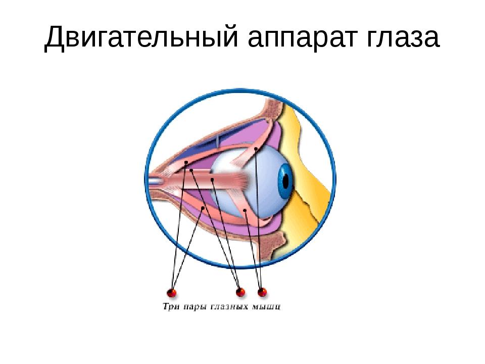 Двигательный аппарат глаза