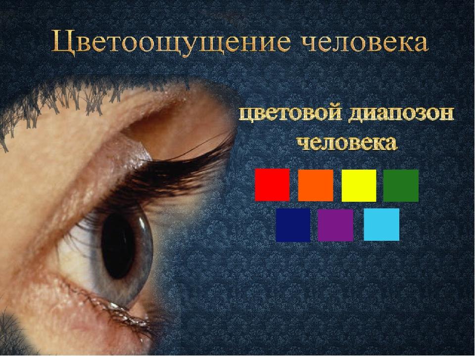 Цветоощущение человека