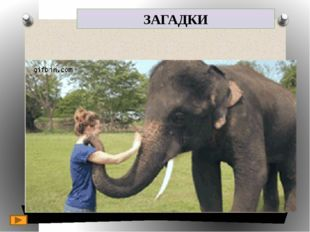 ЗАГАДКИ 5. It is a wild animal. 4. It lives in Africa and Asia. 3. It is grey