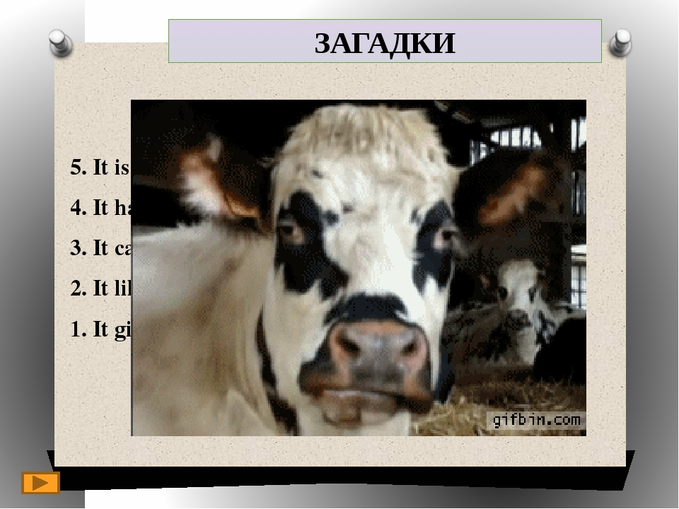 ЗАГАДКИ 5. It is a domestic animal. 4. It has got a long tail. 3. It can be b...