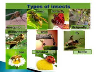 * mosquito wasp fly beetle butterfly dragonfly grasshoppеr ants ladybird bee