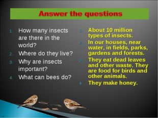 How many insects are there in the world? Where do they live? Why are insects