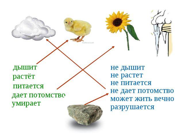 дышит растёт питается дает потомство умирает не дышит не растет не питается н...
