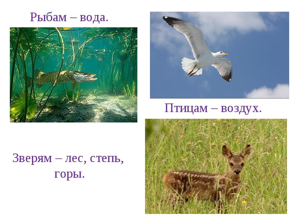 Рыбам – вода. Зверям – лес, степь, горы. Птицам – воздух.