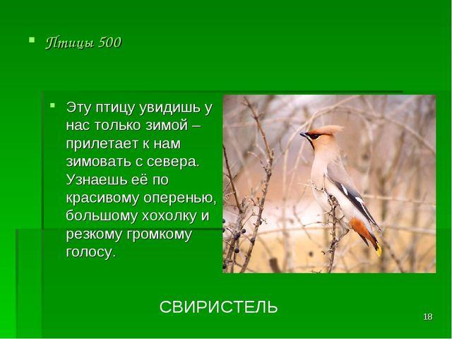 * Птицы 500 СВИРИСТЕЛЬ Эту птицу увидишь у нас только зимой – прилетает к нам...