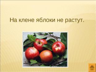На клене яблоки не растут.