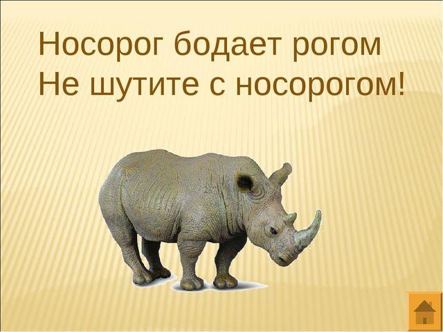 Носорог бодает рогом Не шутите с носорогом!