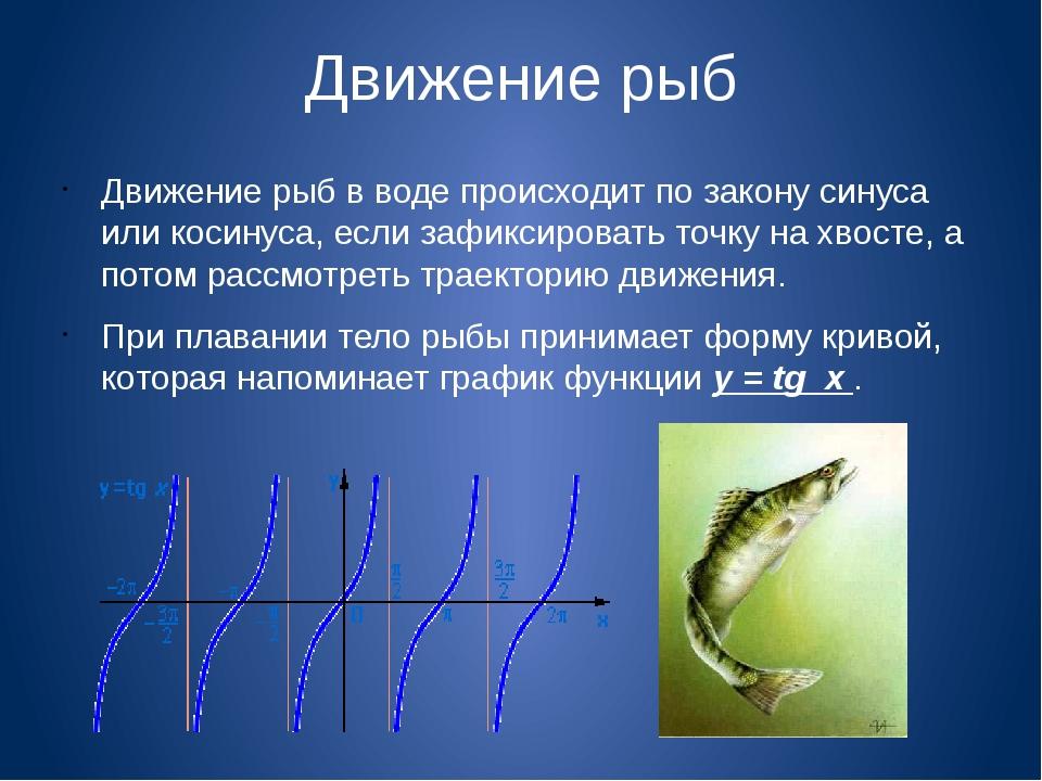 Движение рыб Движение рыб в воде происходит по закону синуса или косинуса, ес...