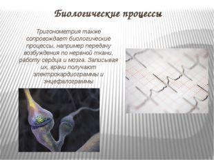 Биологические процессы Тригонометрия также сопровождает биологические процесс